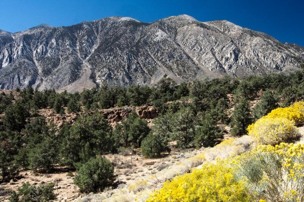 Sierra Nevada Contrasteherbaceacutes_zps66370a7e