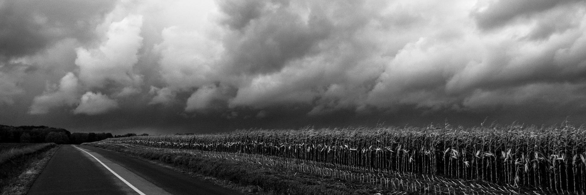 Champs de maïs avant l'orage à l'Île d'Orléans Ileautomne159_zps63c51a8e