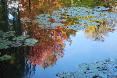 Reflets Giverny-automne-1_zpsxtkzc5yj