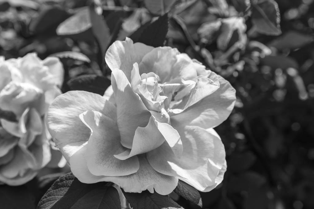 Rose... Maison%207_zpsjvgdctsd