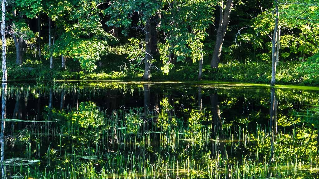 L'étang Ile%20125_zpscydmekoz
