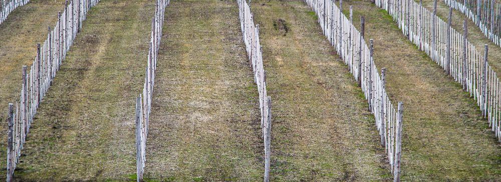 Vignoble de Ste-Pétronille (Île d'Orléans) Ile%2038_zpskneehamb