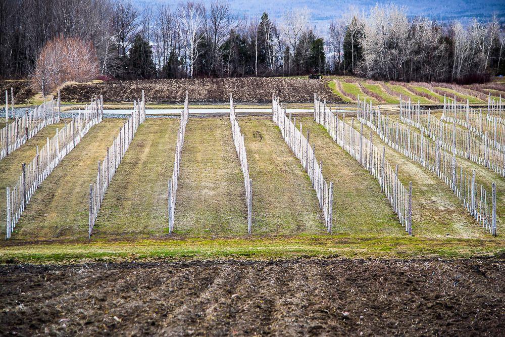 Vignoble de Ste-Pétronille (Île d'Orléans) Ile%2039_zpsuvwkfpkw