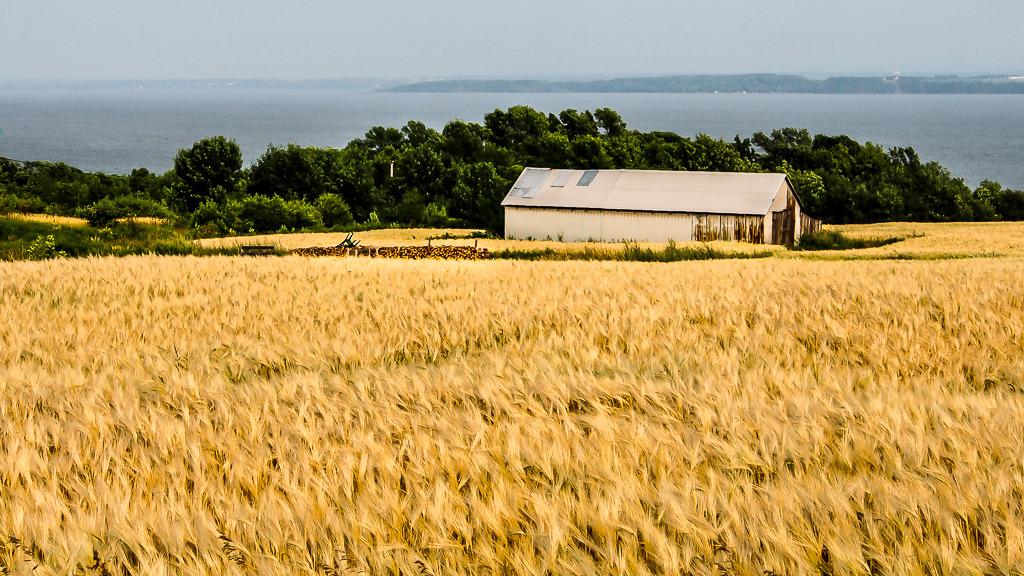 Les blés sont mûrs.... Ile%20146_zps9dqaxsp6