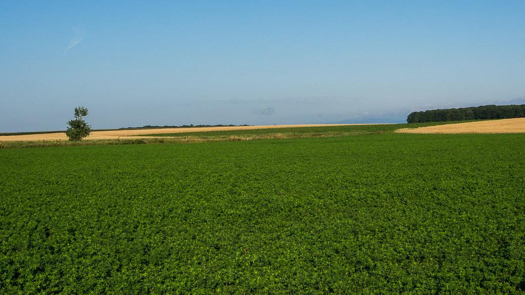 La terre nourricière... Ile%20aout%202015%201_zpsdjcjdvfa