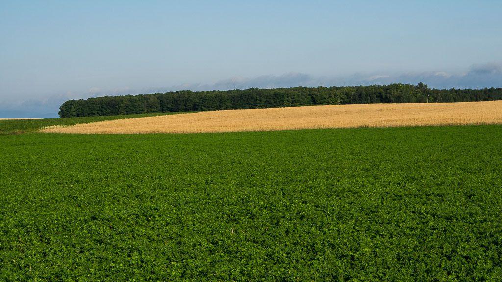 La terre nourricière... Ile%20aout%202015%202_zpsyvek3t82