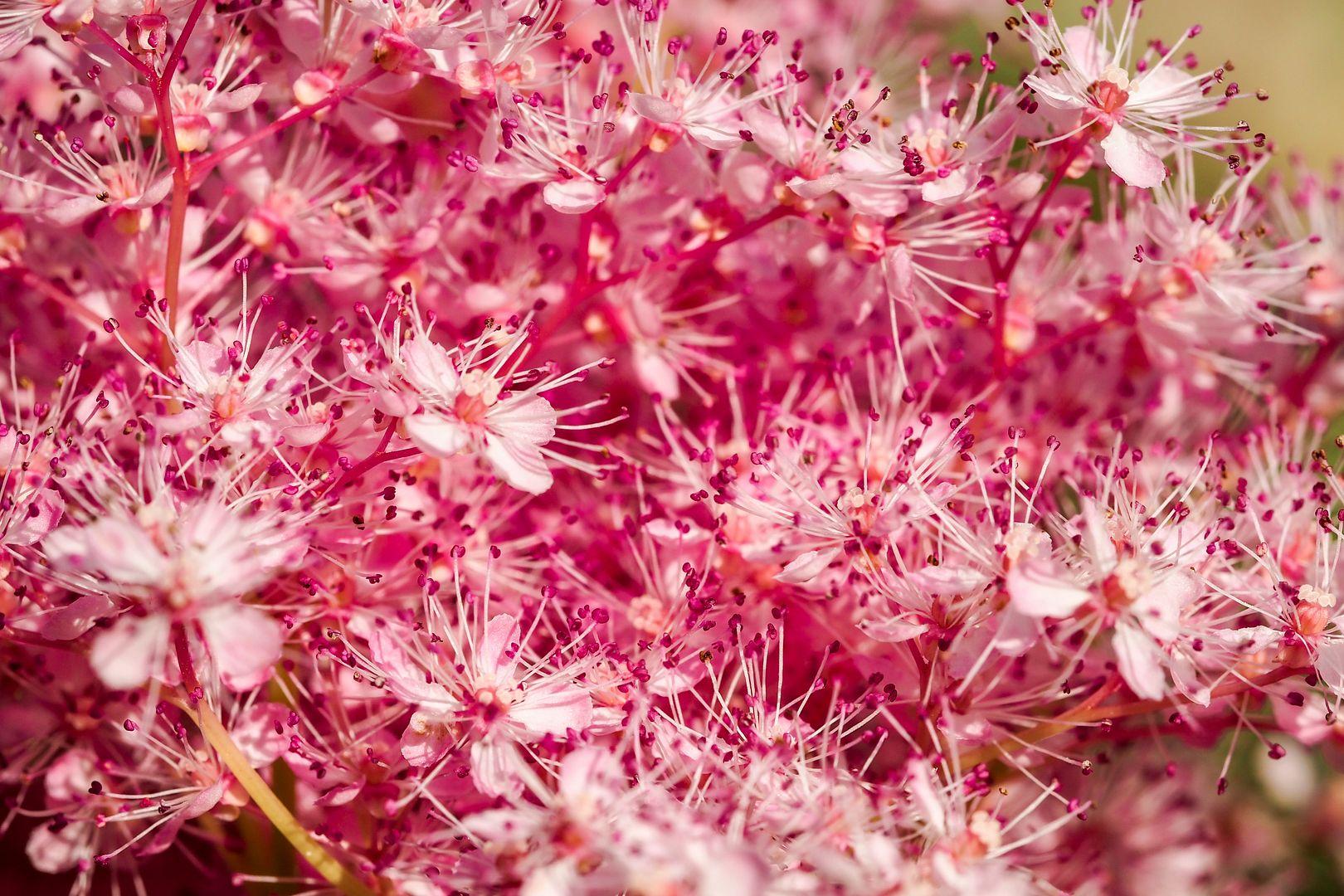 Fleurs... Jardinsmetis10_zpseba25d2e