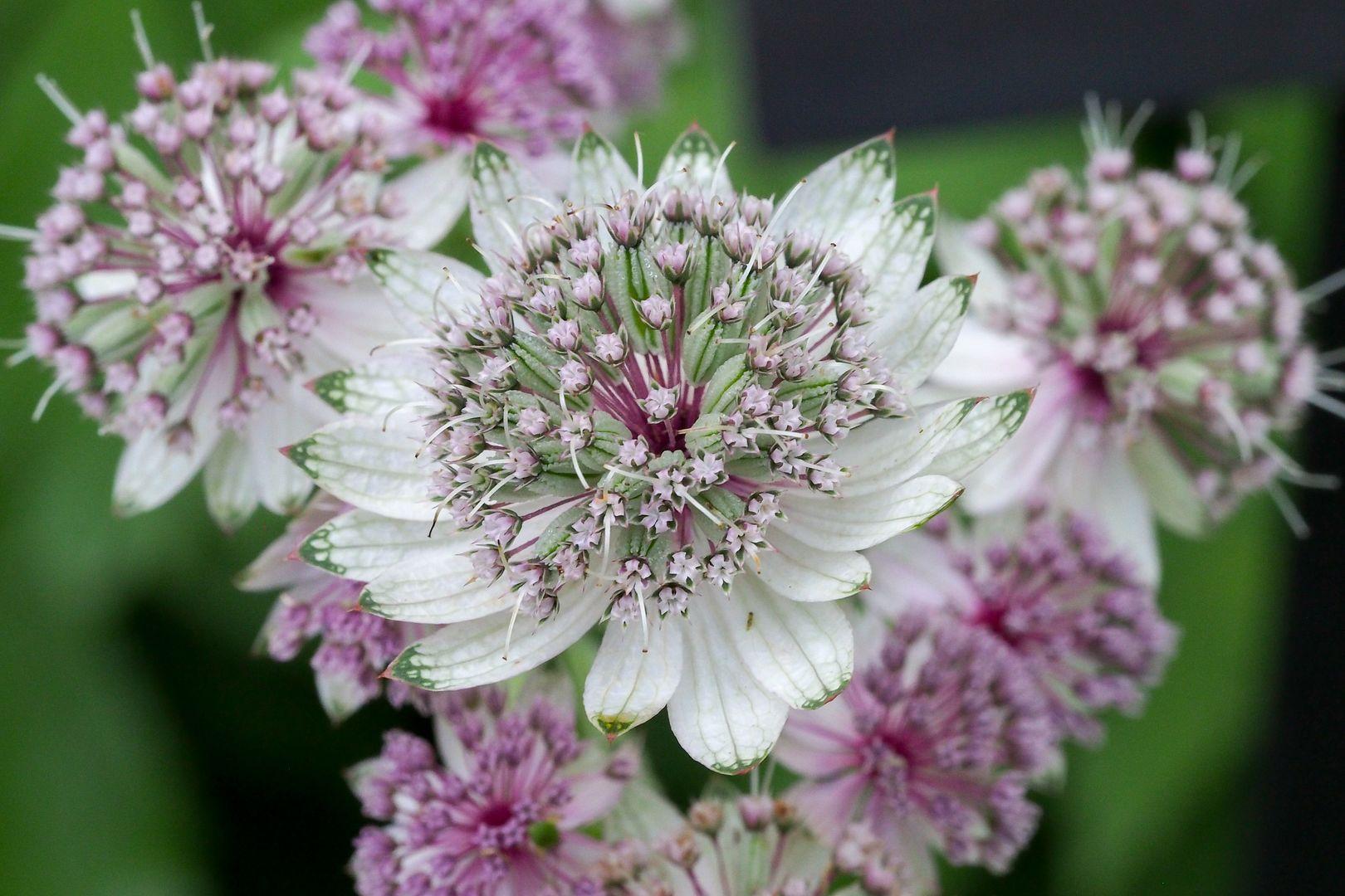 Fleurs... Jardinsmetis11_zps53db6787