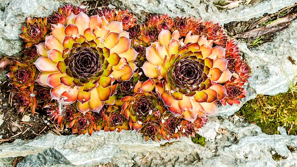 Fleurs... Jardinsmetis18_zpsed54ae3c