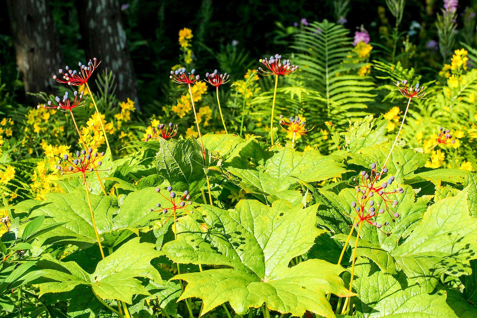 Les Jardins de Métis Jardinsmetis5_zpsc0eb0f07