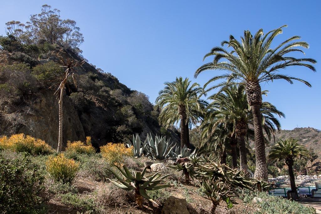 Quelques paysages de l'île de Catalina Long%20Beach%2032_zpslrxrovz0