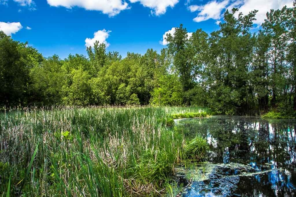 L'étang... Maizeret%2013_zpsayobd4y2