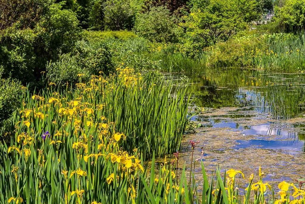 L'étang... Maizeret%204_zpsx7jnqz5h