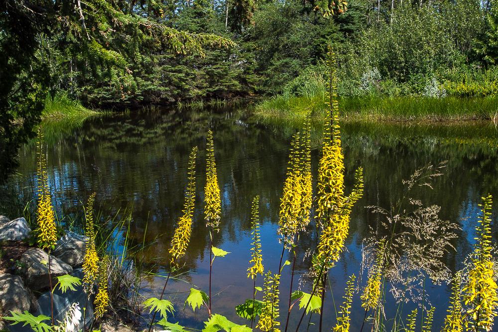 Les Jardins de Métis Jardins%20metis%202_zpsxi5gpmds