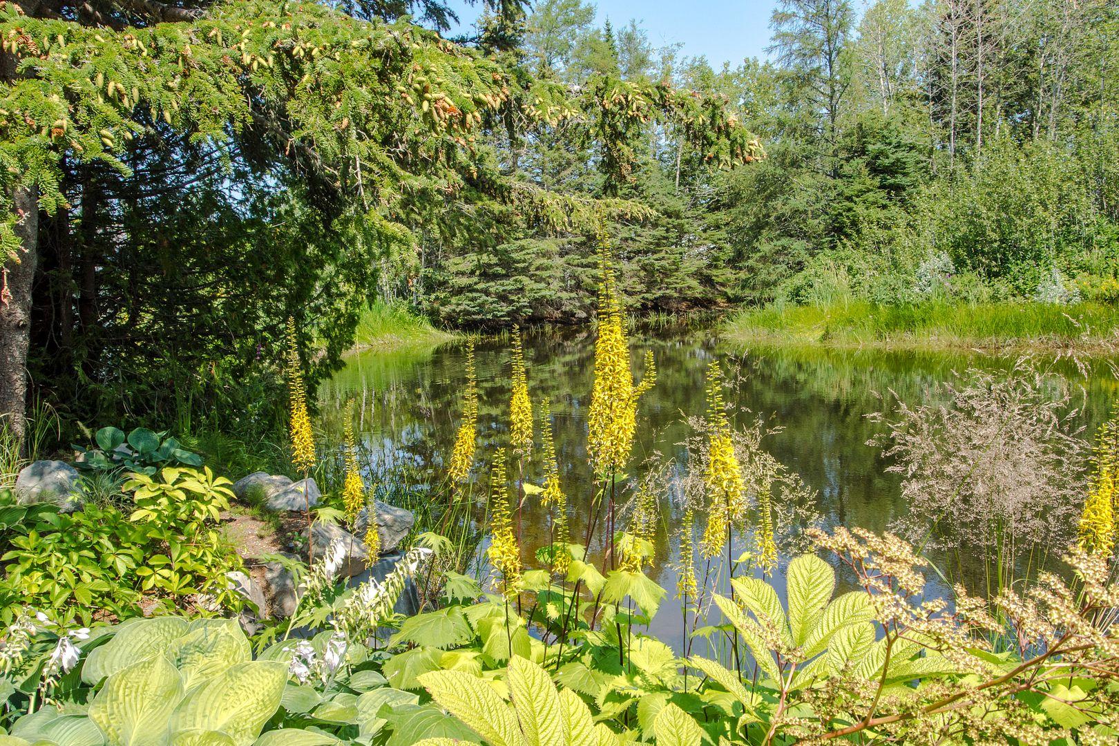 Le calme au bord de l'étang... Metis56_zpsa53aa75c