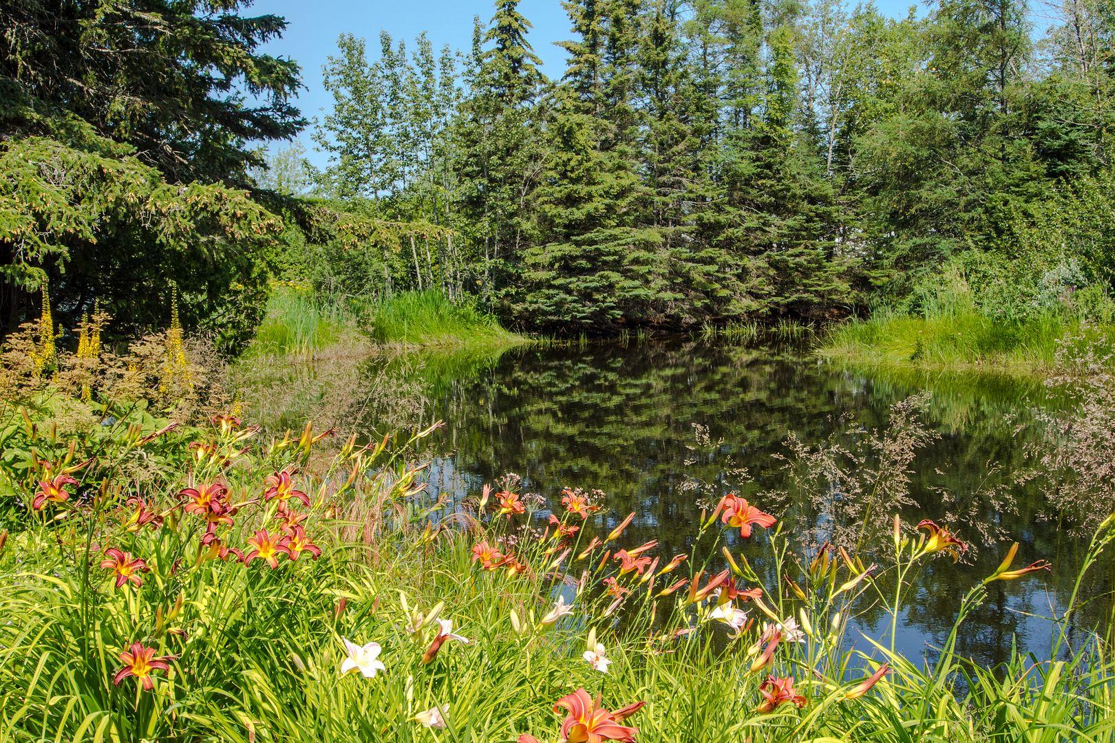 Le calme au bord de l'étang... Metis57_zps713506c4
