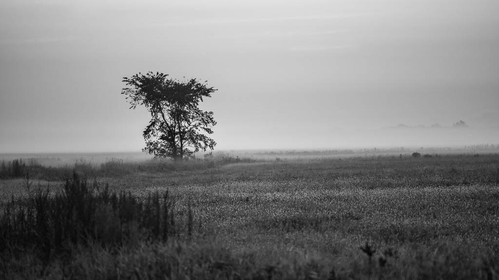 L'arbre Mitan%2048a_zpsagqdwvza