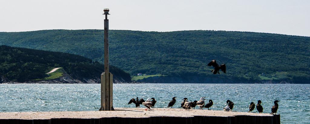 Village de l'Île du Cap Breton (Nouvelle-Écosse) Nouv%20ecosse%20juillet%202015%20154_zps0vy6gwt4
