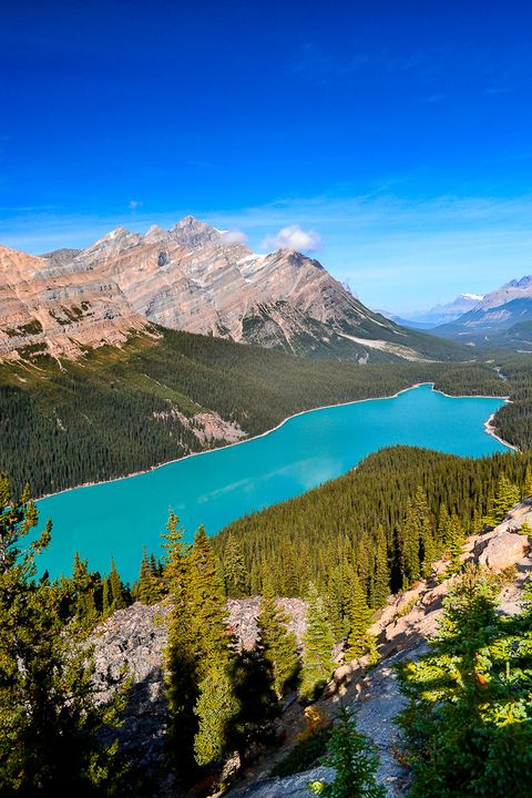 Le lac Peyto Rocheuses%208_zpscmefekee