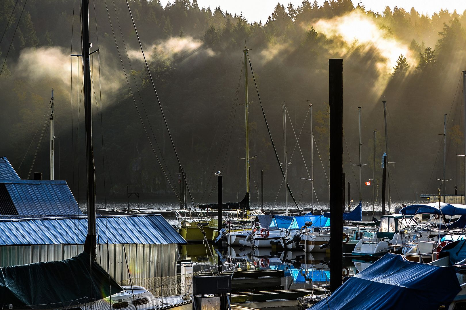 Matin d'automne sur la Côte Pacifique Vancouver%20133_zpsxnb2uofo
