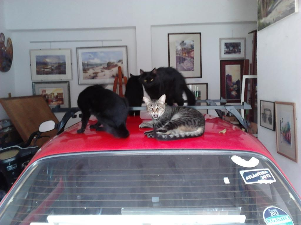 estas son mis mascotas! IMG10361_zps3e4dde7a