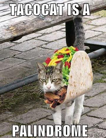 taco cat Pictures, Images and Photos