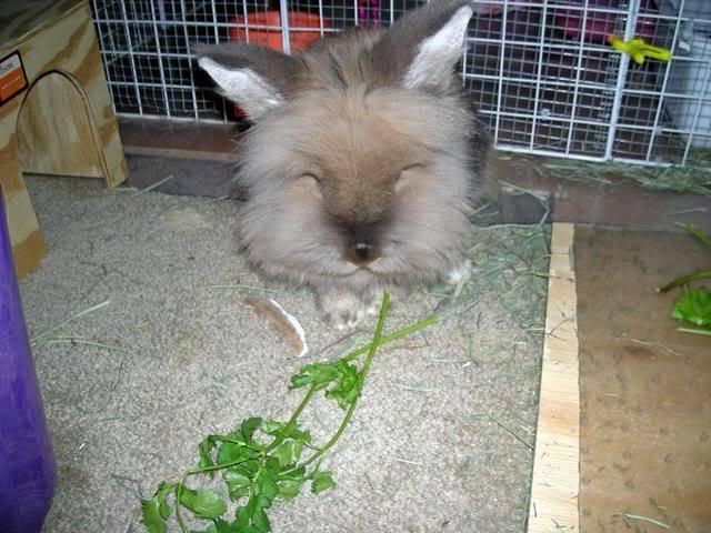 Bunny piccies! DSCN0411_edited
