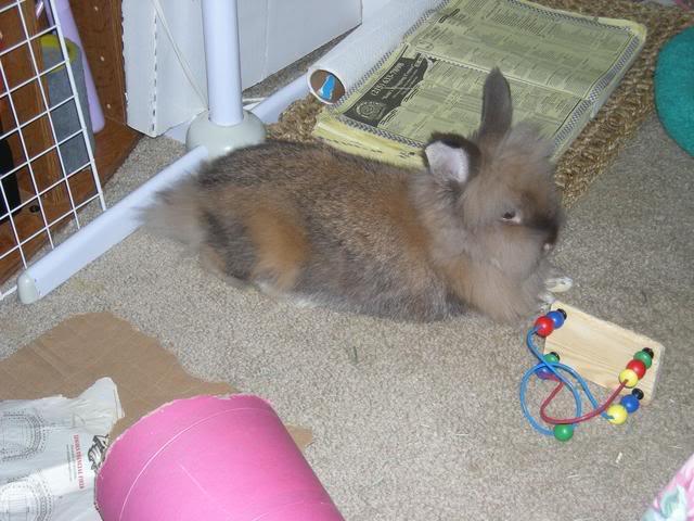 Bunny piccies! DSCN0461_edited