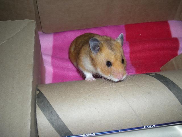 My ham hams! DSCN1524
