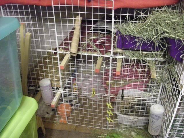 Bunny piccies! DSCN0526