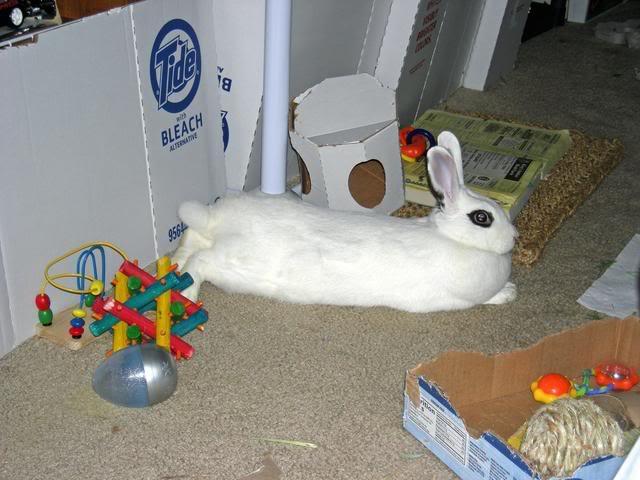 Bunny piccies! DSCN0211_edited