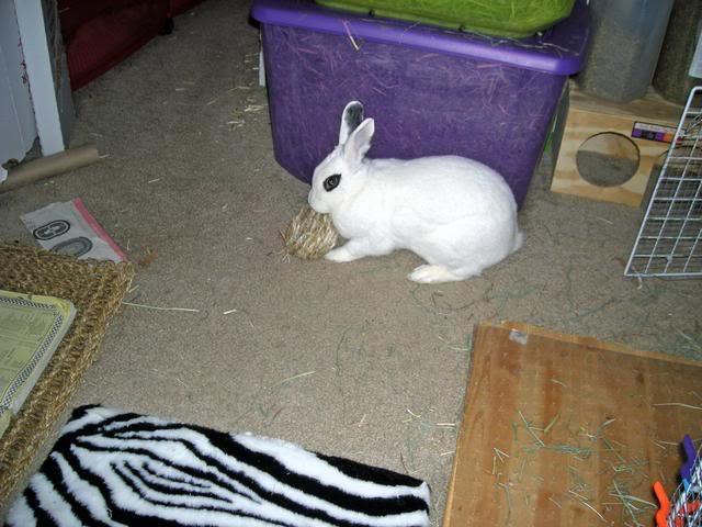 Bunny piccies! DSCN0490_edited