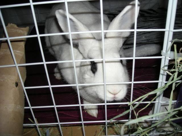 Bunny piccies! DSCN0500