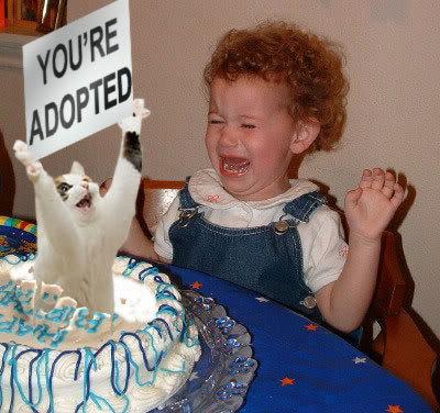 Oh Noez! Youadoptedcat