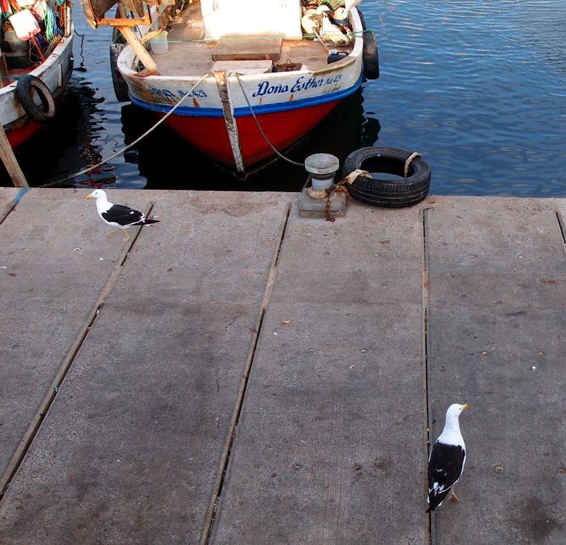 Au port depuis le port!! P1303484