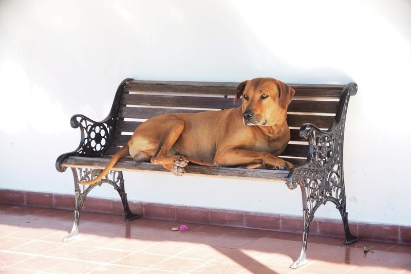 Bico repose!! P3190014_zpsdwd7zuxz