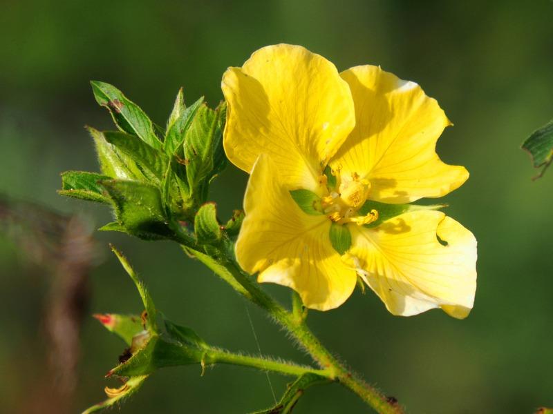 Fleurs sauvages et la National!! P3260035_zpsv49ywcfr
