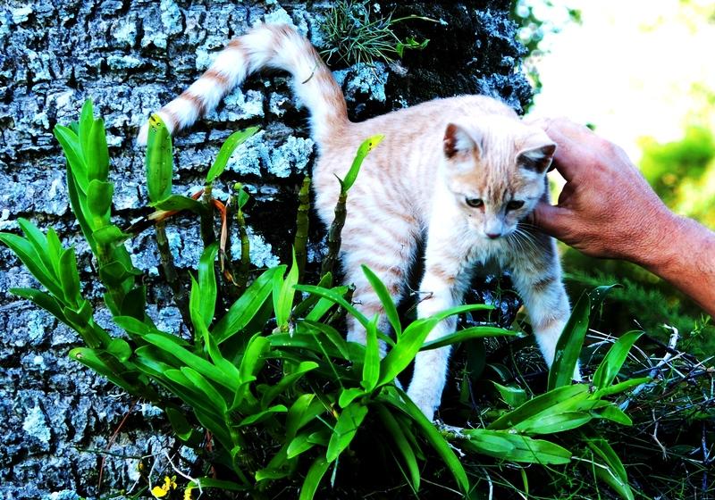 Le chien,le chat et le vieu!!(Ajoute ++) P4150002%202_zpswewbubrl