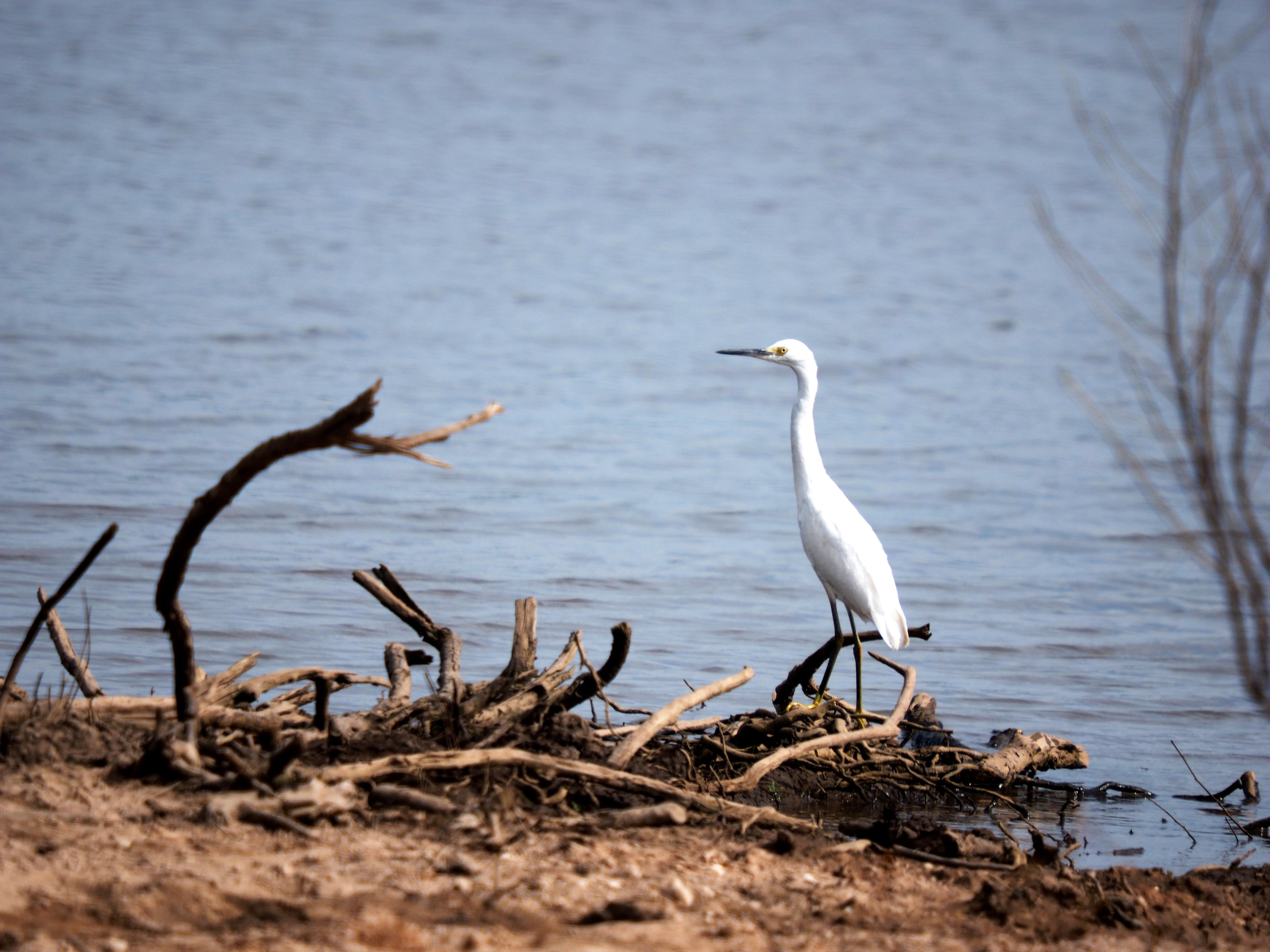 Au bord du fleuve Uruguay P4200184_zpsf57cnvu3
