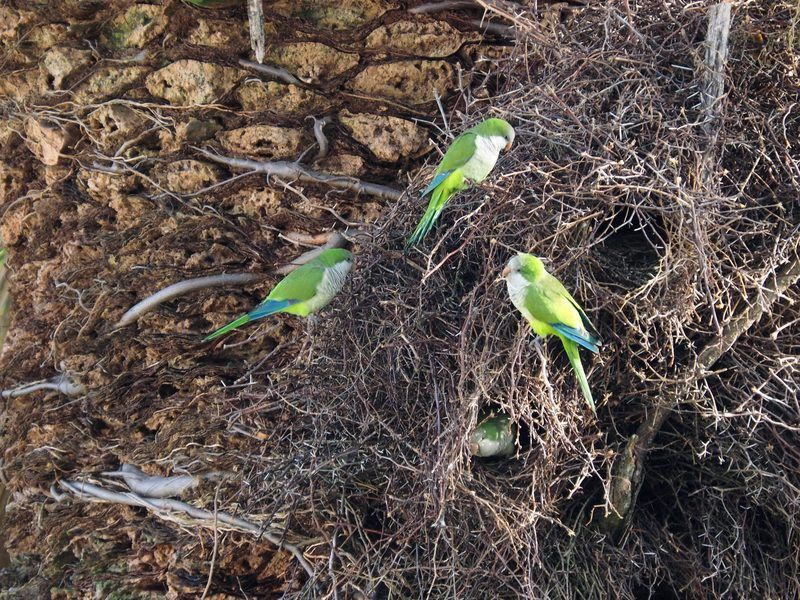 Encore les péroquets et nids P5060001_zps265b9qky