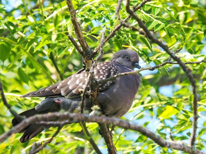 Au jardin quelques oiseaux!! P5090006_zpskhm3wqqx