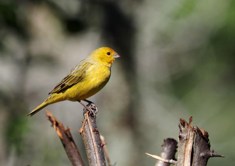 Au jardin quelques oiseaux!! P5090008_zpslc3sjta9