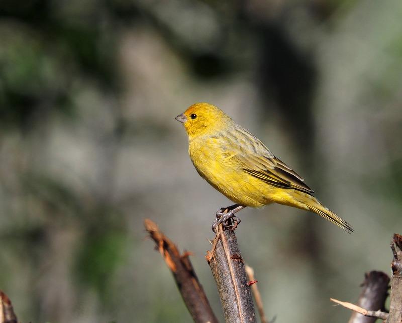 Au jardin quelques oiseaux!! P5090009_zpsmryvpryl