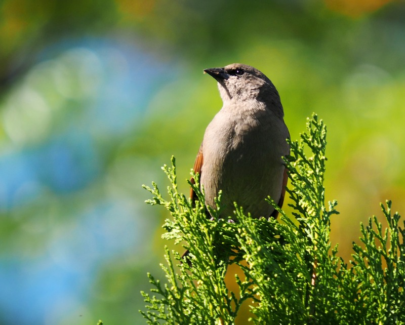 Au jardin quelques oiseaux!! P5090010_zps2zv1fb13