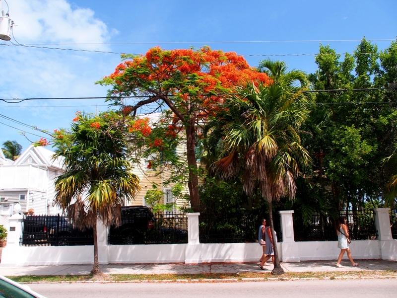 Visite vers et a Key West (Ajoute une depuis l'air) P6060056_zpsq1fm1yid