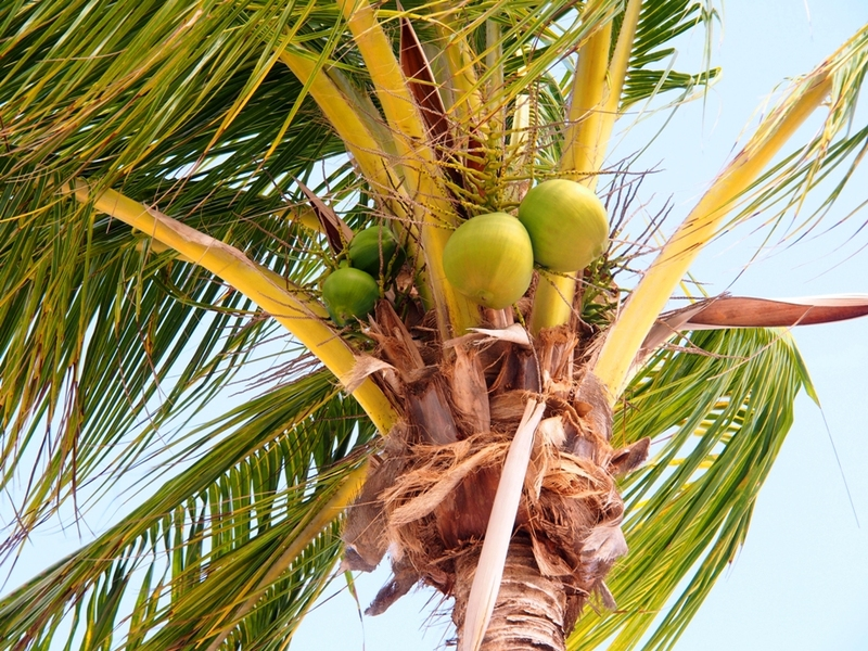 Visite vers et a Key West (Ajoute une depuis l'air) P6060067_zpsblo3bnsy