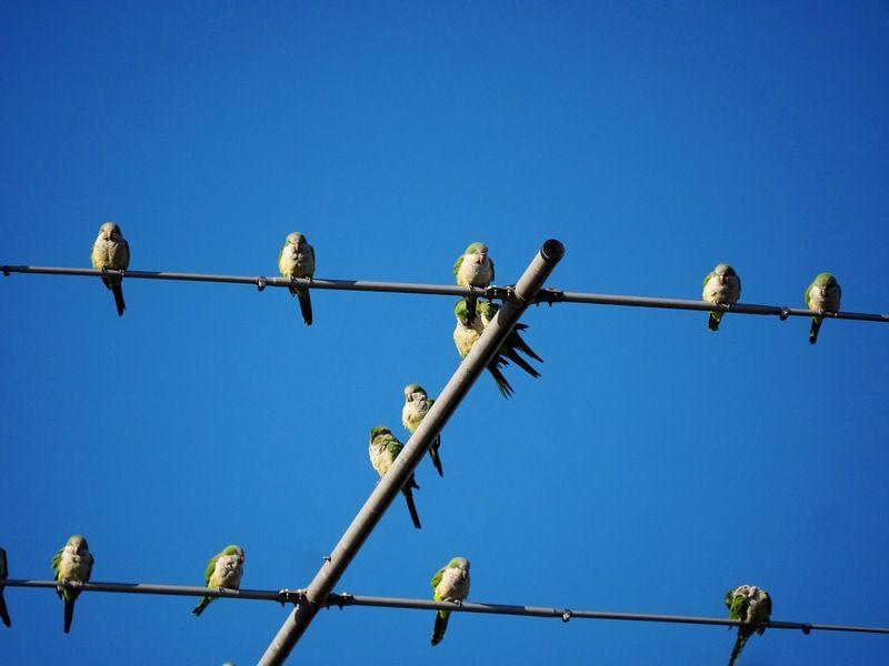 Quelques oiseaux P7200002_zpsdhrjkpo5