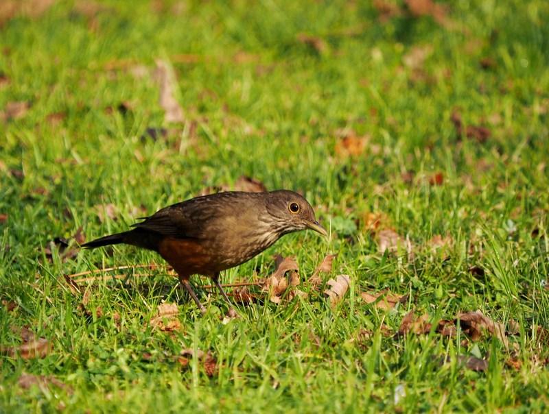 Quelques oiseaux P7260003_zpshxms9lk0