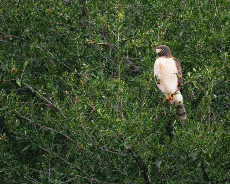Quelques oiseaux P7260011_zpssx9qv7p3
