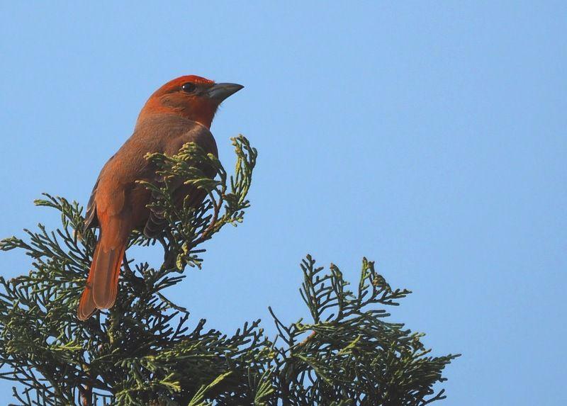 Quelques oiseaux P7260012_zpsaveeusz1